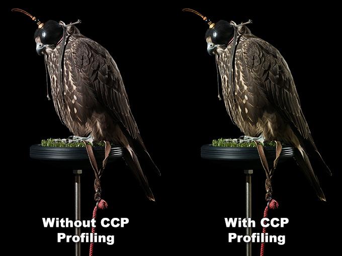 gyr_falcon_ccp_profiling